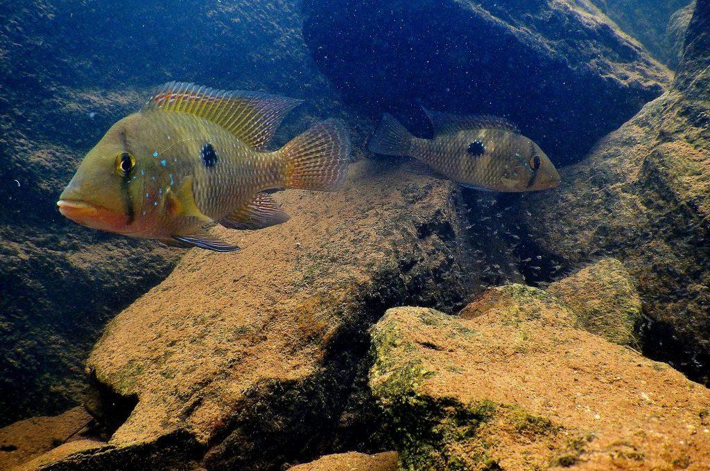 peixes do lagamar