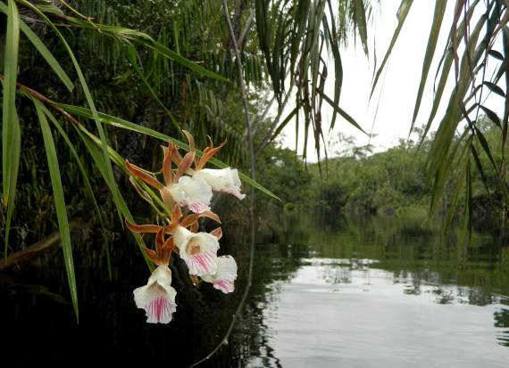 rio da pesca na Amazônia