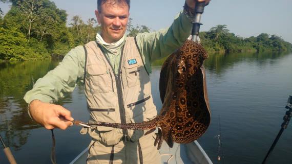 arraia encontrada do rio são benedito na pesca na Amazônia