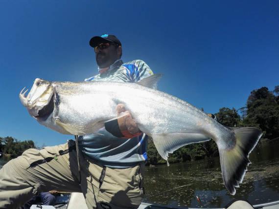 peixe cachorrra larga fisgado da pesca na Amazônia