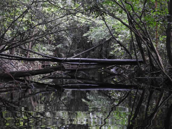 navegação em igarapes da pesca na Amazônia
