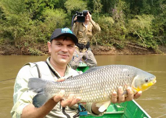 piauçu fisgado na pescaria no pantanal