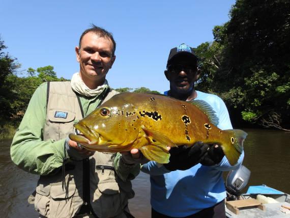 peixe tucunaré porteiro fisgado em pesca na Amazônia